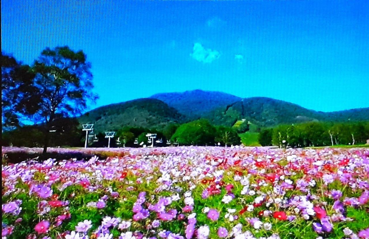 5 Lokasi Taman Bunga Paling Indah Di Jepang Taman Di Jepang