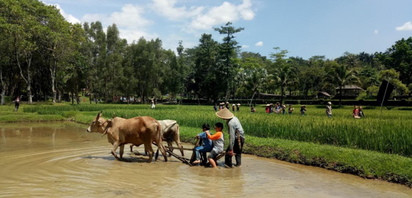 Kebun Wisata Pasirmukti Bogor: Harga Tiket, Fasilitas dan Lokasi