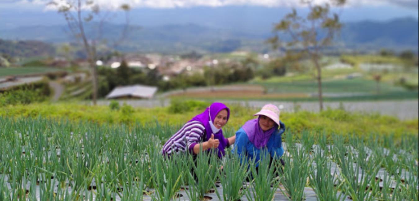 10 Foto Nepal Van Java Dusun Butuh Magelang: Harga Tiket dan Aktivitas