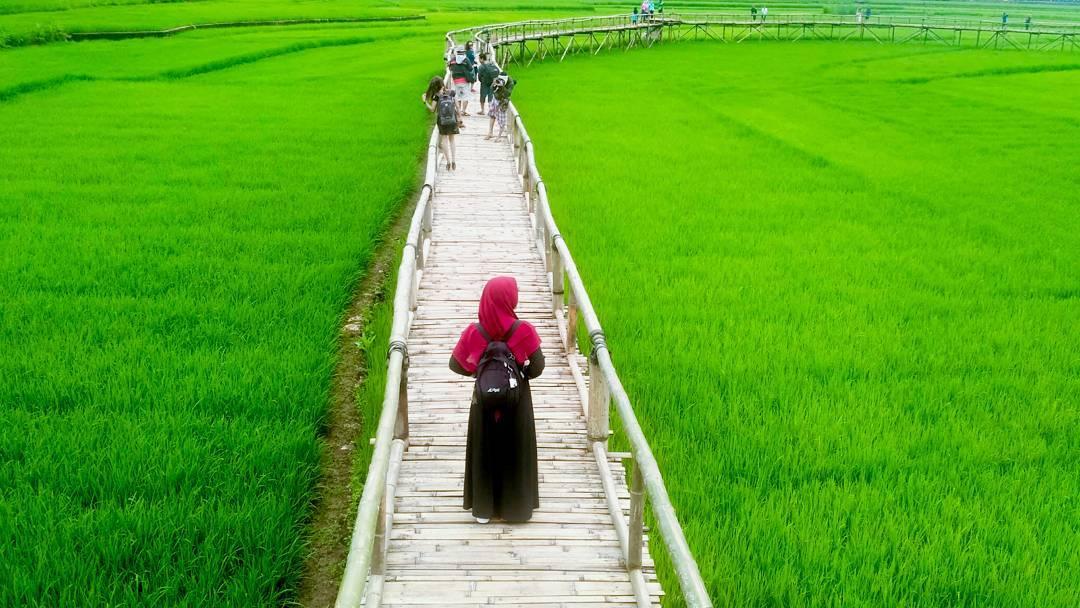 4 Destinasi Wisata Sawah Populer yang Wajib Anda Kunjungi